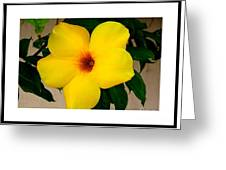 Tropical Yellow Blossom Greeting Card