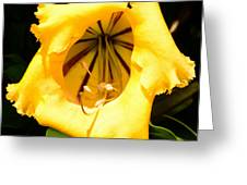 Tropical Yellow Greeting Card