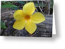 Tropical Yellow Flower Greeting Card
