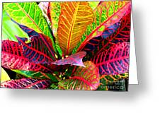 Tropicals Gone Wild Naturally Greeting Card