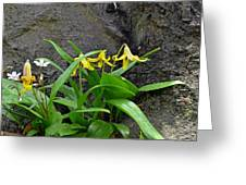 Trout Lily In The Woods Greeting Card
