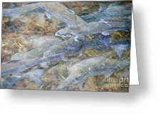 Trout Pond Abstract Greeting Card