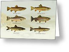 Trout Species Greeting Card