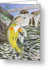 Trout Stream In May Greeting Card