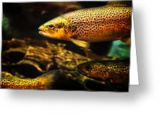 Trout Swiming In A River Greeting Card