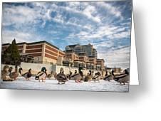 Truckee Ducks Greeting Card