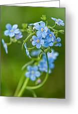 True Forget-me-not Greeting Card