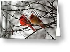 True Love Cardinal Greeting Card