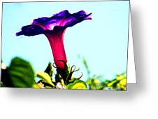 Trumpet Flower Greeting Card