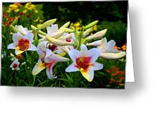 Trumpet Lilies Greeting Card