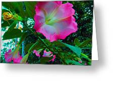 Trumpet Plant Greeting Card