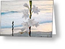 White Trumpet-shaped Flowers At Dana Point Beach California  Greeting Card