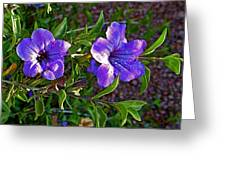 Trumpet Vine In Apache Junction-arizona   Greeting Card