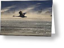 Trumpeter Swan Silhouetted In Flight Greeting Card