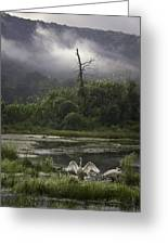 Trumpeter Swans At Sunrise Greeting Card