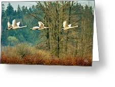 Trumpeters Five Greeting Card