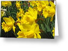 Trumpeters Of Spring Greeting Card
