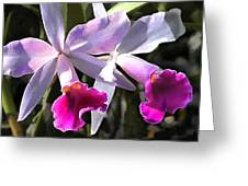 Trumpeting Purple Cattleya Orchids Greeting Card
