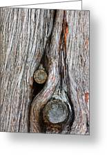Trunk Knot Greeting Card by Carlos Caetano