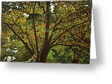 Trunk Of Life Greeting Card
