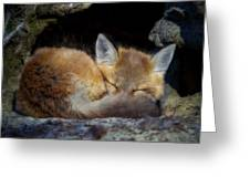 Fox Kit - Trust Greeting Card