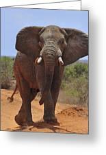 Tsavo Elephant Greeting Card
