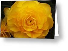 Tuberous Begonia Greeting Card