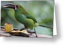 Tucan Eating Greeting Card