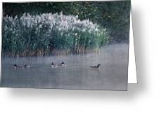 Tucked Away Greeting Card by Skip Willits