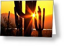 Tucson Sunset Greeting Card