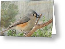 Tuffted Titmouse Early Spring Greeting Card