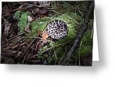 Tufted Mushroom Showing Greeting Card