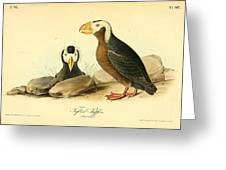 Tufted Puffins Greeting Card by Philip Ralley