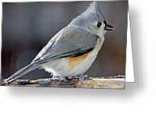 Tufted Titmouse Animal Portrait Greeting Card by A Gurmankin