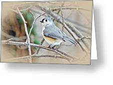 Tufted Titmouse - Baeolophus Bicolor Greeting Card