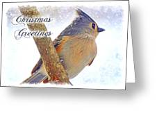 Tufted Titmouse Christmas Card Greeting Card