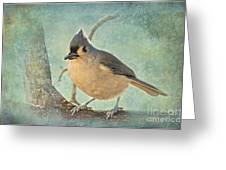 Tufted Titmouse IIi Greeting Card