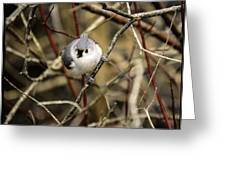 Tufted Titmouse On The Watch Greeting Card