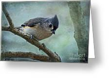 Tufted Titmouse With Snowflake Decorations Greeting Card