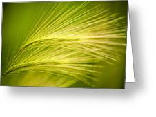 Tufts Of Ornamental Grass Greeting Card