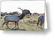 Tules Elks Of Tomales Bay California - 7d21199 Greeting Card by Wingsdomain Art and Photography