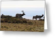 Tules Elks Of Tomales Bay California - 7d21230 Greeting Card