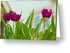 Tulip 4 Greeting Card