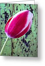 Tulip Against Green Wall Greeting Card