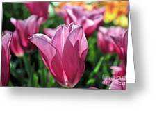 Tulip Angel Greeting Card
