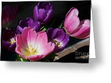 Tulip Bouquet 1 Greeting Card by Marcus Dagan