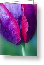 Tulip Bright  Greeting Card