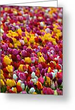 Tulip Bud Farm Portrait Greeting Card