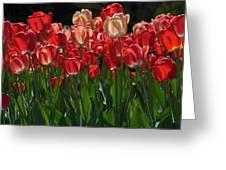 Tulip Bunch Greeting Card