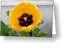 Tulip Center Greeting Card